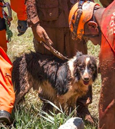 Bombeiro presta homenagem a Thor, cão que trabalhou em Mariana e Brumadinho