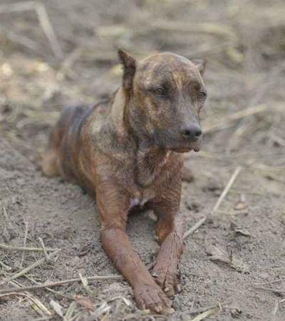 Encontraram a família do cão que esperava tutores em Brumadinho