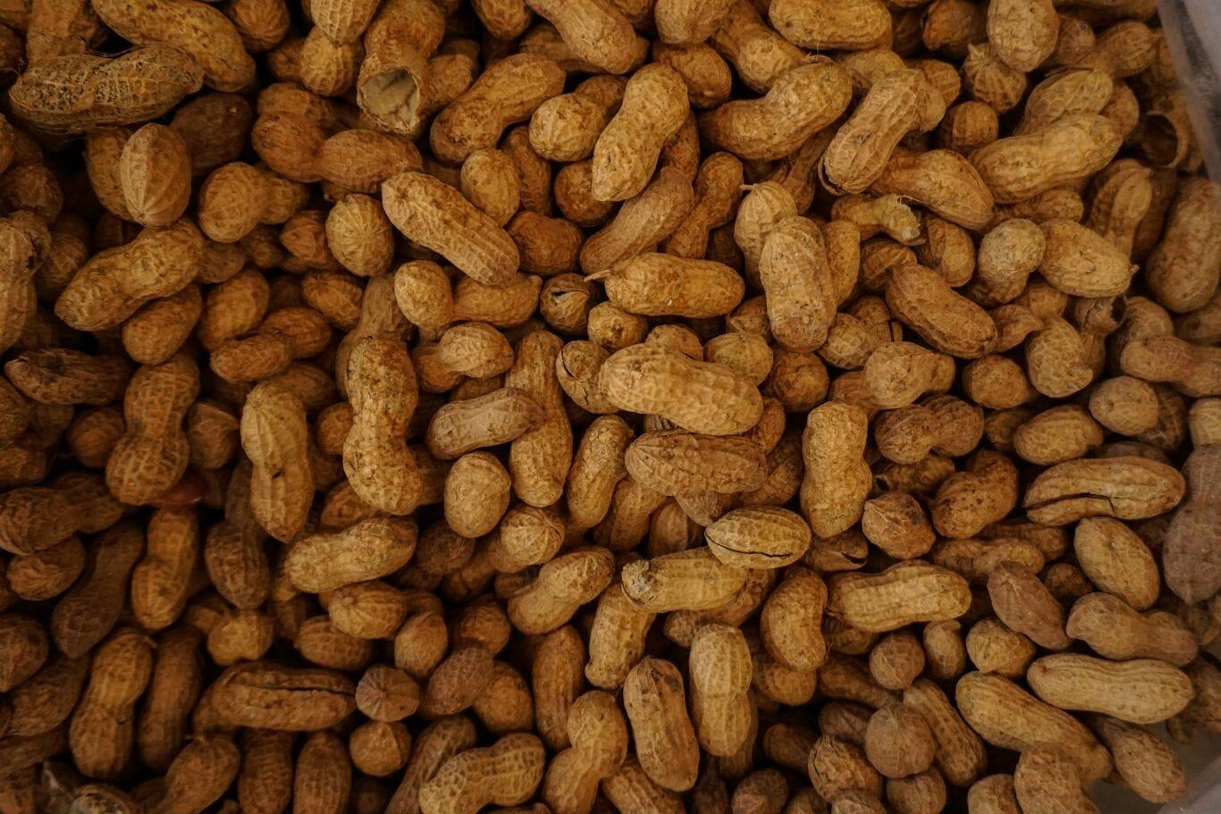 alergia alimentar 2