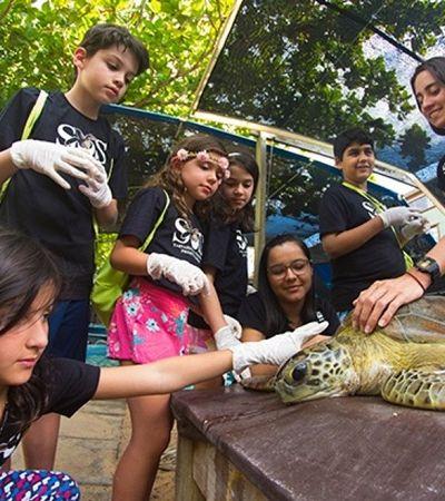 Crianças podem se inscrever para ser 'biólogos por um dia' no Projeto Tamar