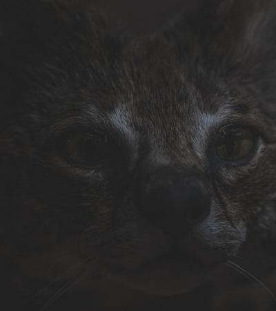 Fotógrafo faz ensaio curioso (e meio macabro) com animais empalhados