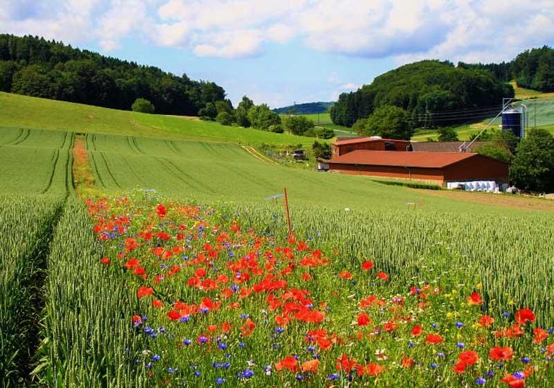 flores silvestres pesticidas 1