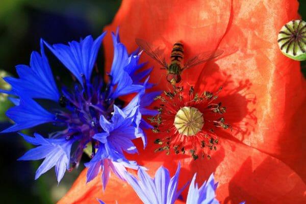 flores silvestres pesticidas 2