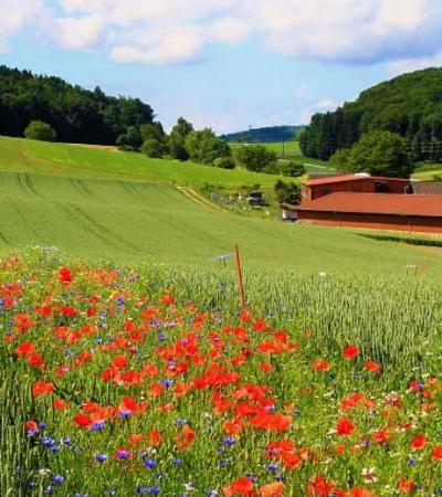 Plantio de flores silvestres é capaz de reduzir uso de pesticida em plantações