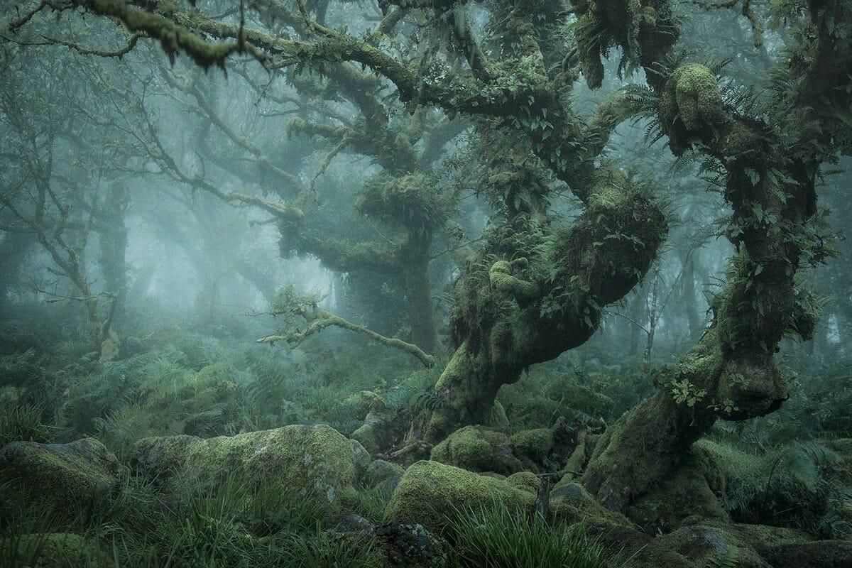 floresta mágica Inglaterra 1