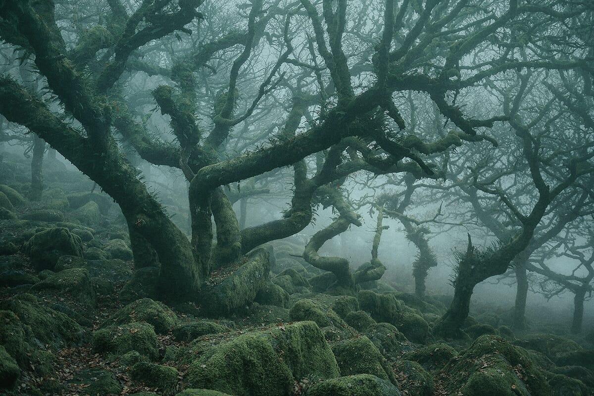 floresta mágica Inglaterra 2
