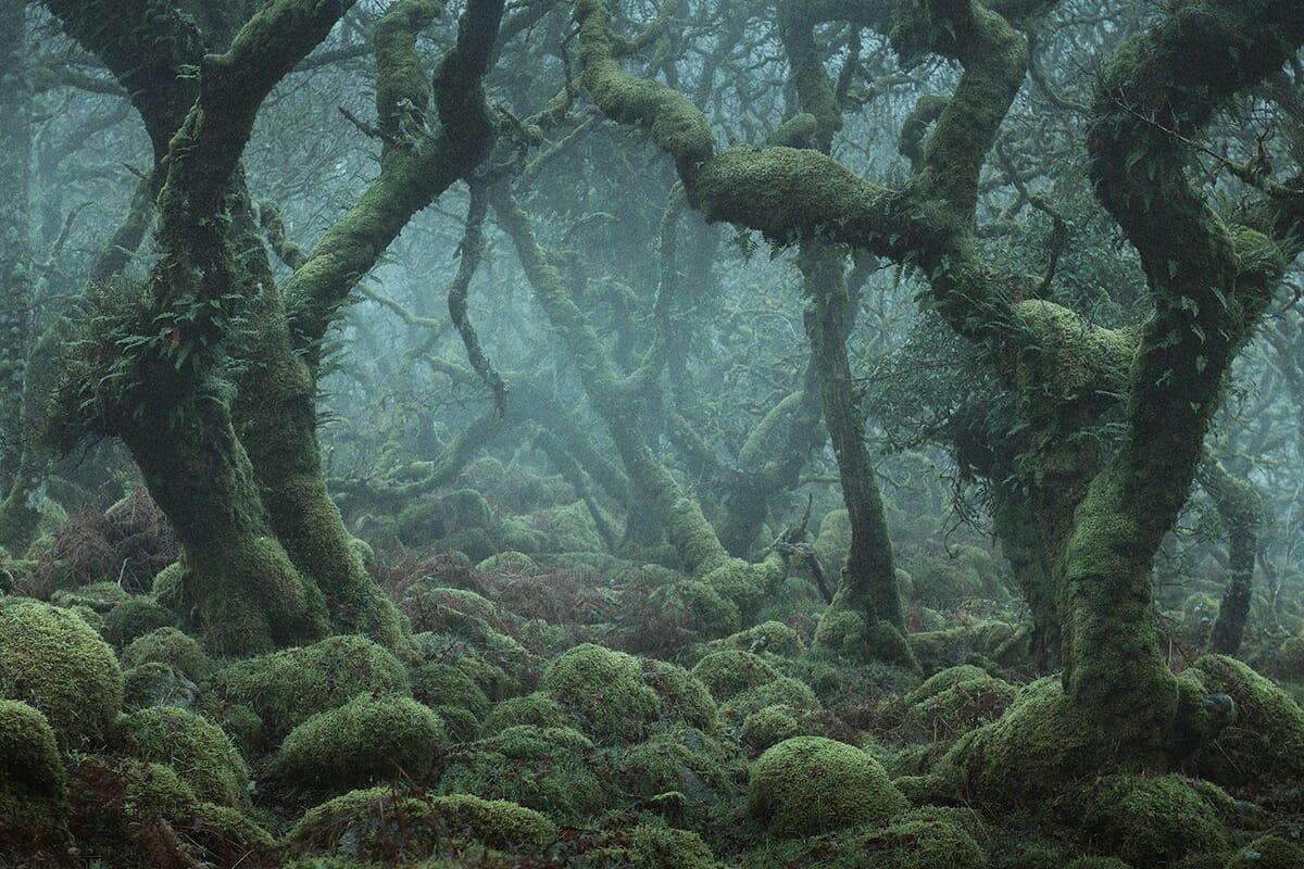 floresta mágica Inglaterra 3
