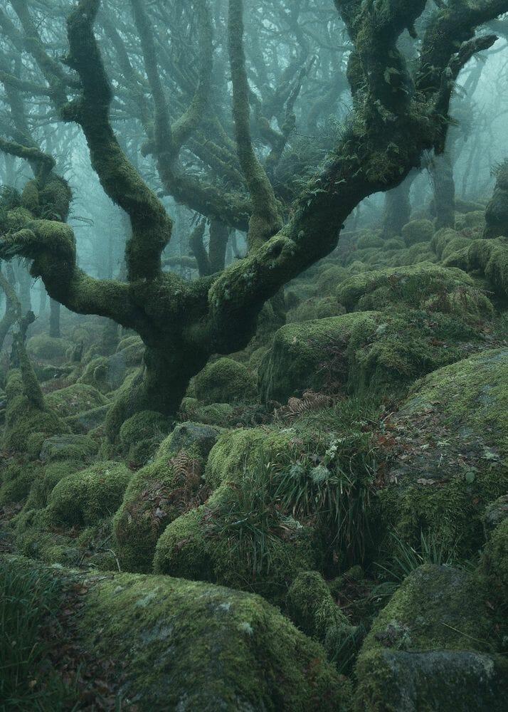 floresta mágica Inglaterra 5