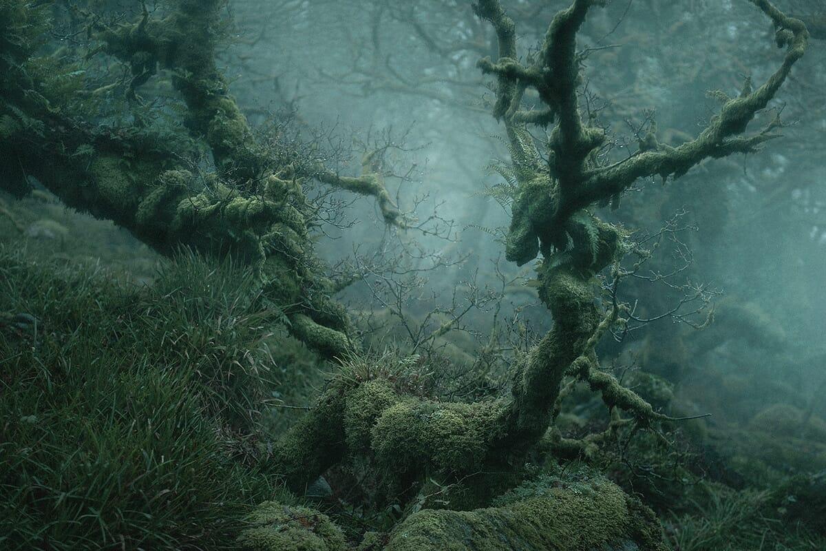 floresta mágica Inglaterra 6