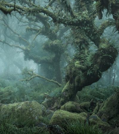 Derreta-se com a série 'Mística', que retrata as florestas encantadas da Inglaterra