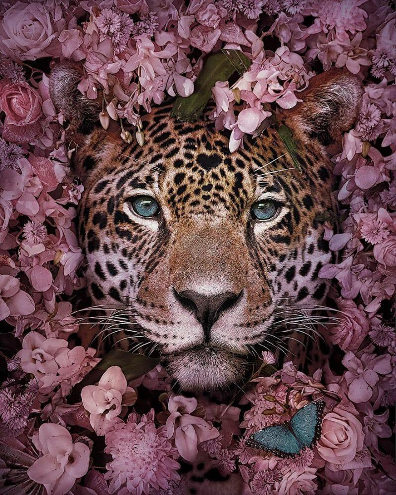 fotos animais extinção 1