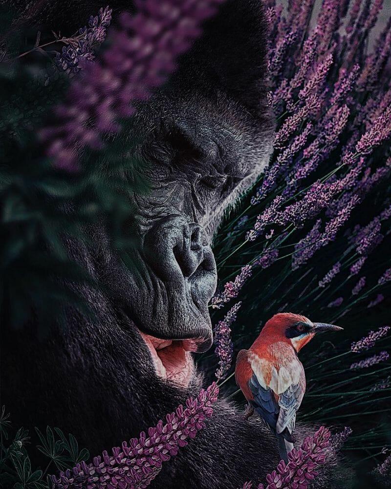 fotos animais extinção 10
