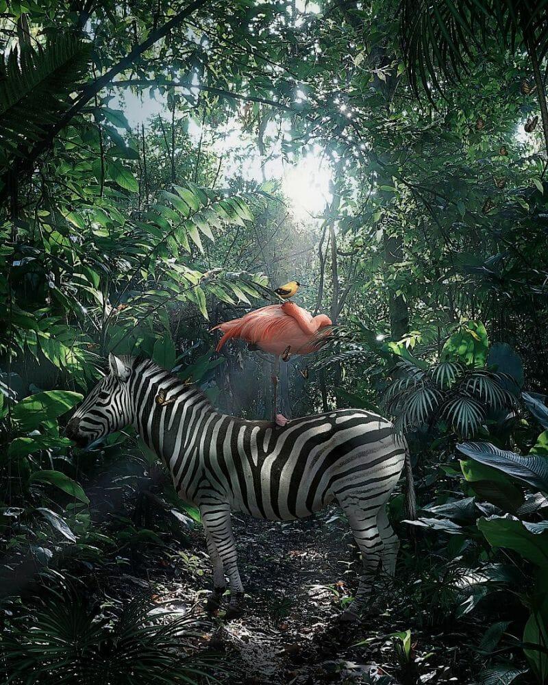 fotos animais extinção 12