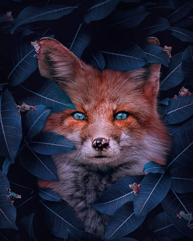 fotos animais extinção 2