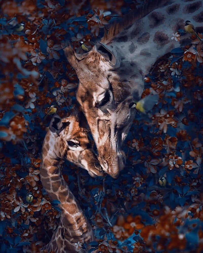 fotos animais extinção 3
