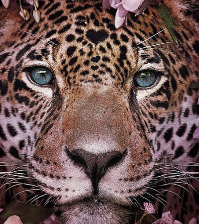 Esta delicada série de retratos é um alerta sobre espécies em extinção