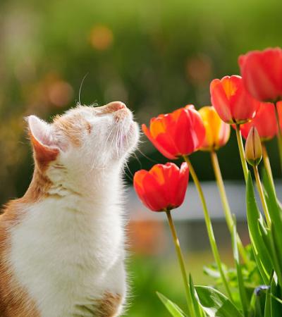 O encantador ensaio do gatinho que não tem olhos, mas enxerga com o coração