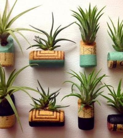 Aprenda a plantar suculentas usando rolhas