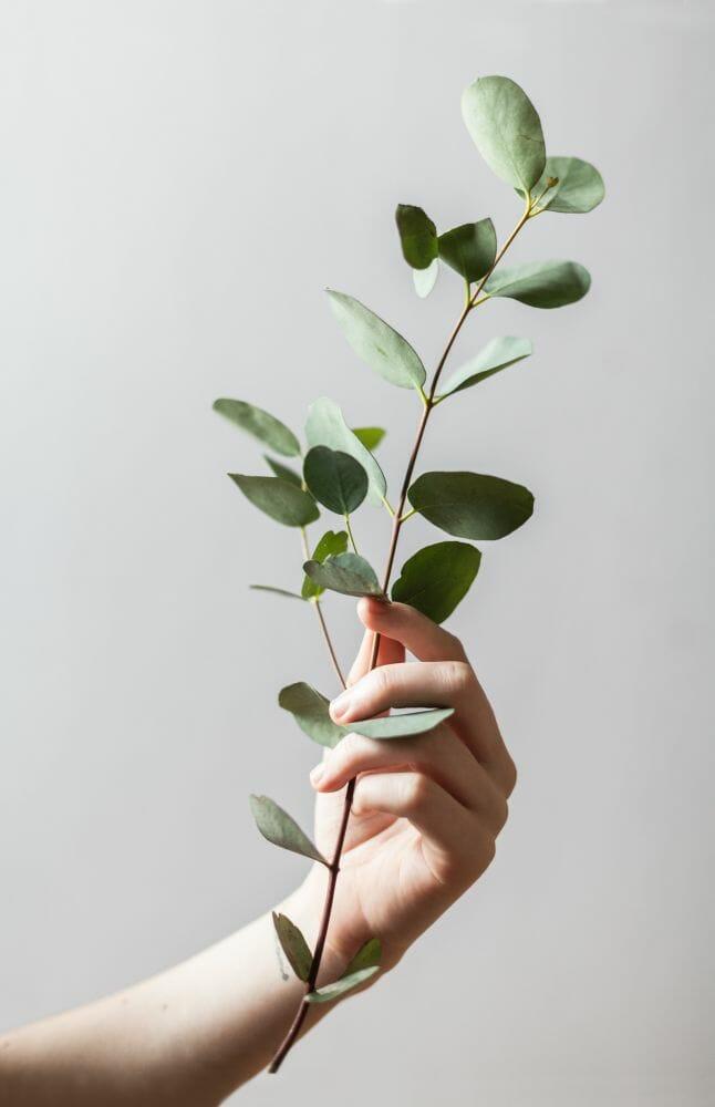 toque nas plantas 1