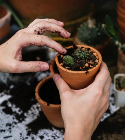 Toque faz plantas crescerem até 30% menos, aponta estudo