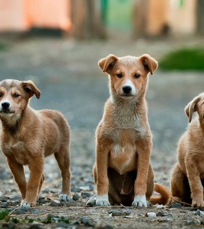 Descubra onde conseguir atendimento veterinário grátis em São Paulo