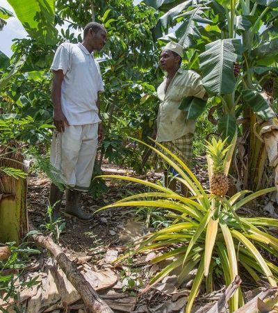 Essa ilha à beira de um colapso climático se transformou com o reflorestamento