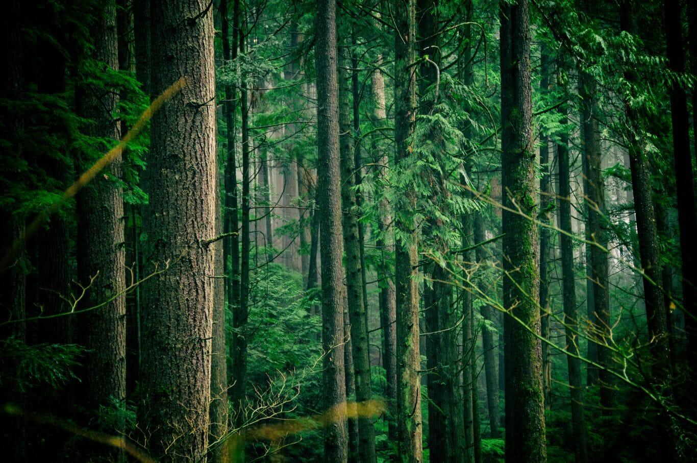 Austrália plantar árvores 1