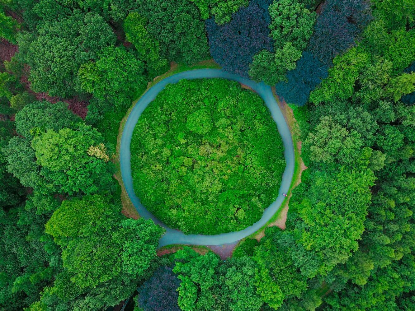 Austrália plantar árvores 2