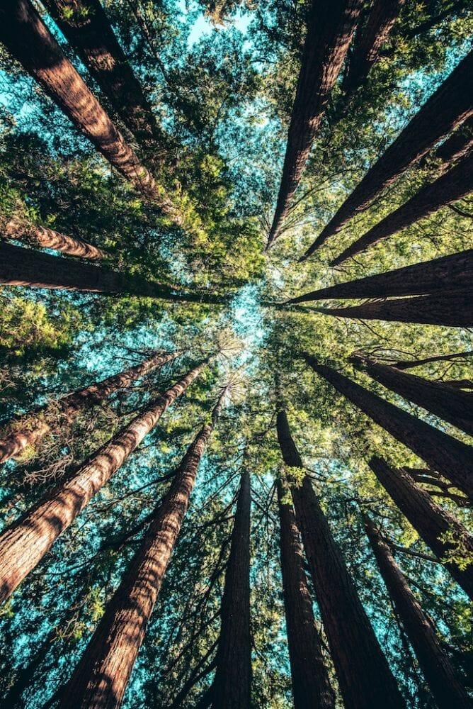 Austrália plantar árvores 3