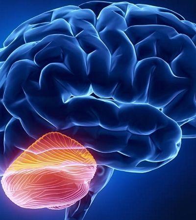 Encontraram uma parte do cérebro afetada pelo Alzheimer que pode levar a novos tratamentos