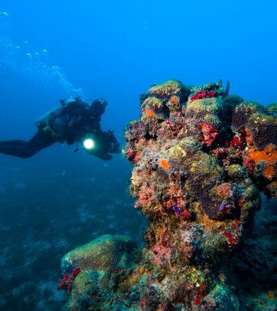 Parque Nacional de Abrolhos agora tem trilha subaquática