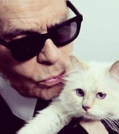 Gata de Karl Lagerfeld pode herdar fortuna de 400 milhões de reais