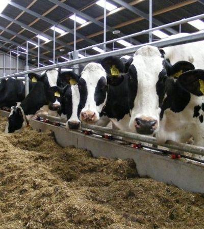 Cada vegetariano pode evitar a morte de 582 de animais em um ano, aponta estudo