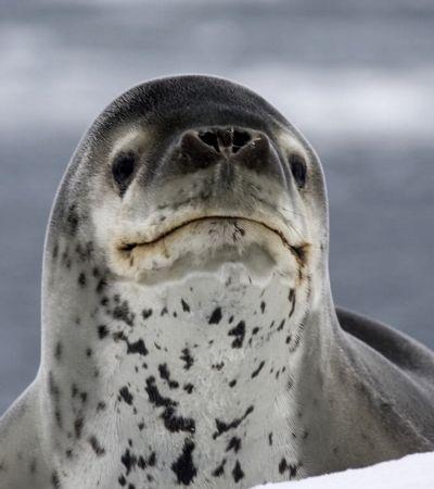 A explicação inacreditável para o pen drive que foi parar no cocô de uma foca