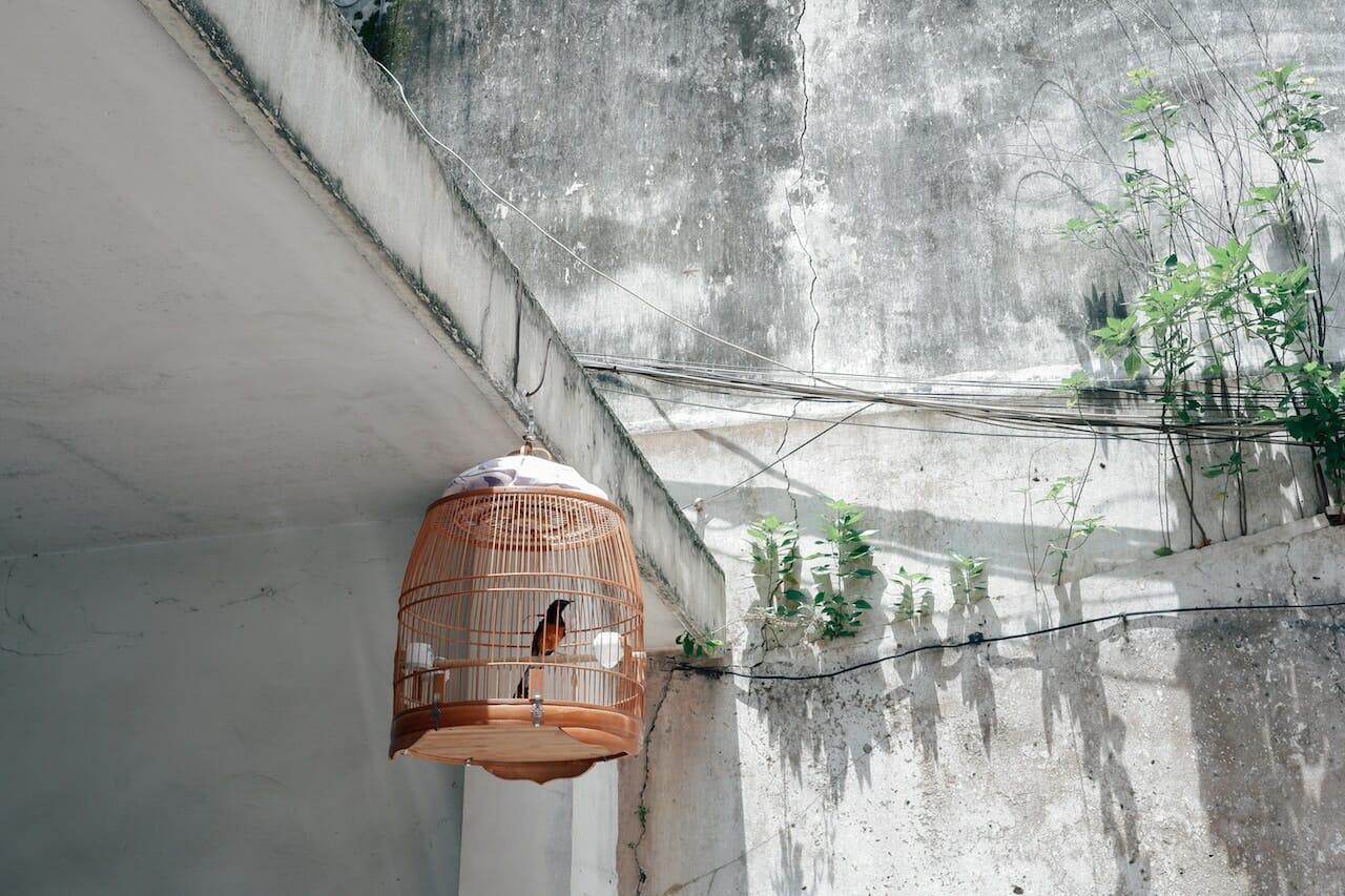 Índia pássaro gaiola 1