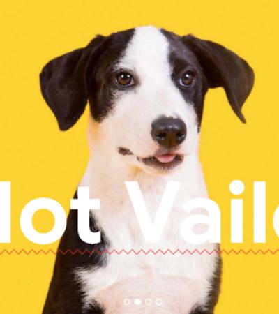 Carta aberta para você que quer comprar um cachorro | Adotar é Hype #3
