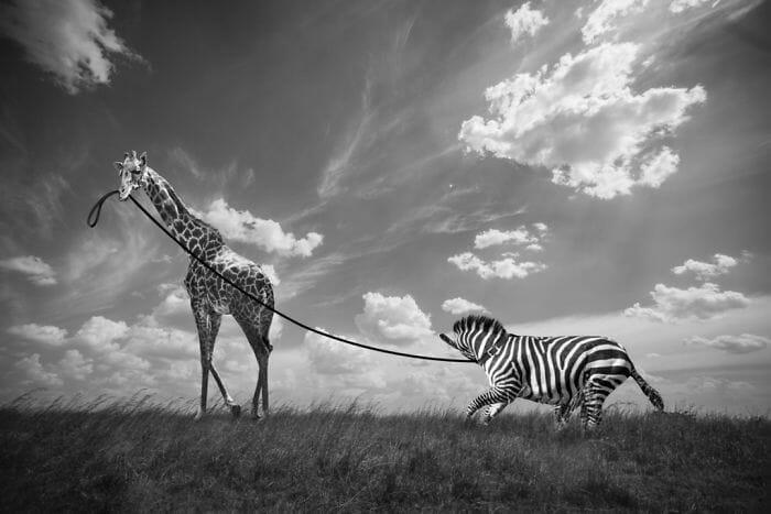 cenas inusitadas animais 15