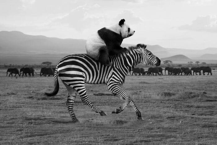cenas inusitadas animais 2