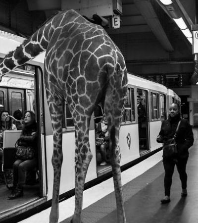 Fotógrafo francês cria cenas inusitadas com animais usando photoshop