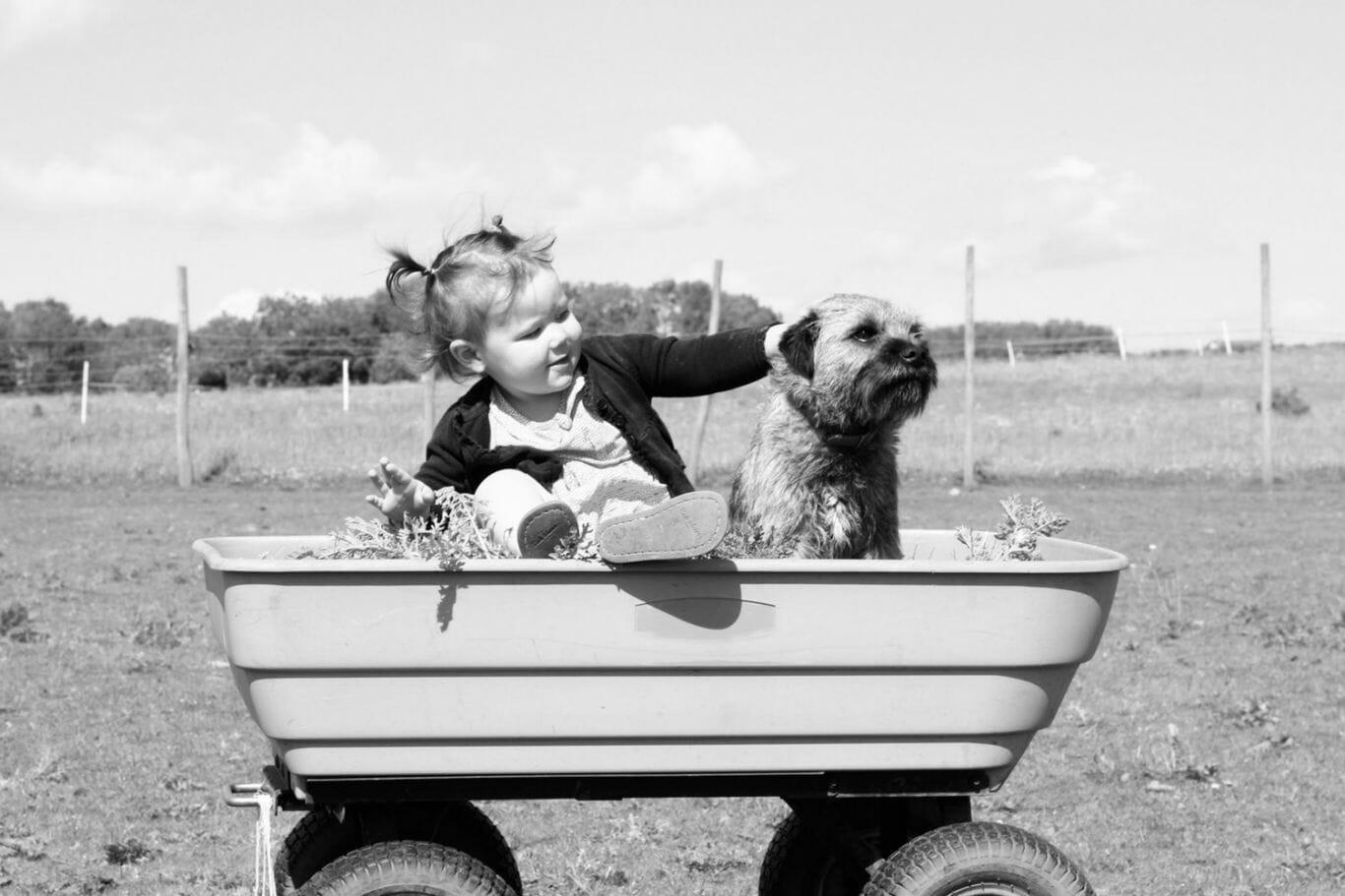 Criança brincando com cachorro