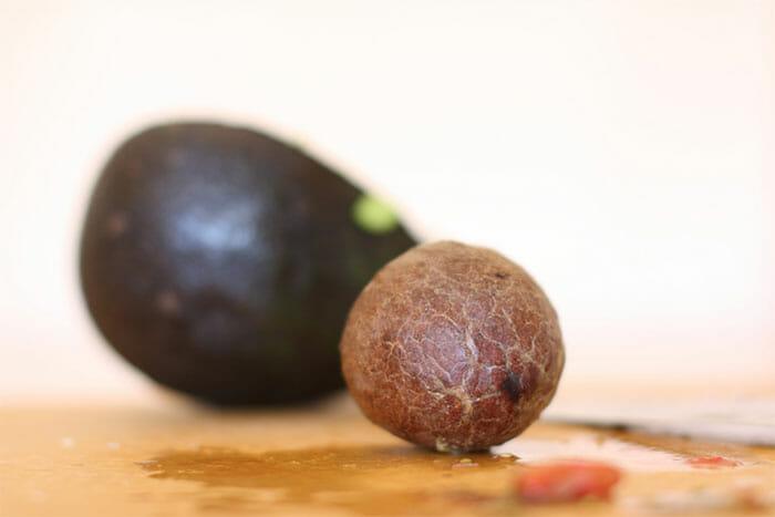 descartáveis semente abacate 3