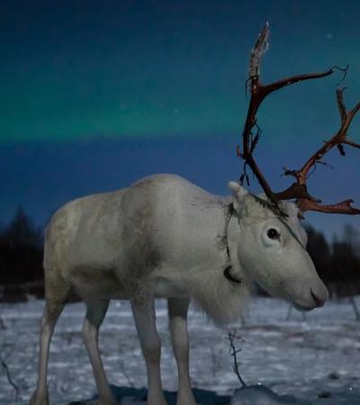 Fotógrafo dá dicas de como registrar a vida animal como ela é