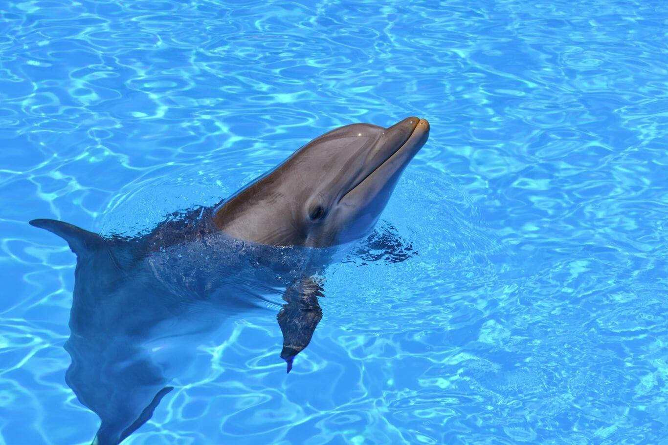 golfinho filhote morto 3