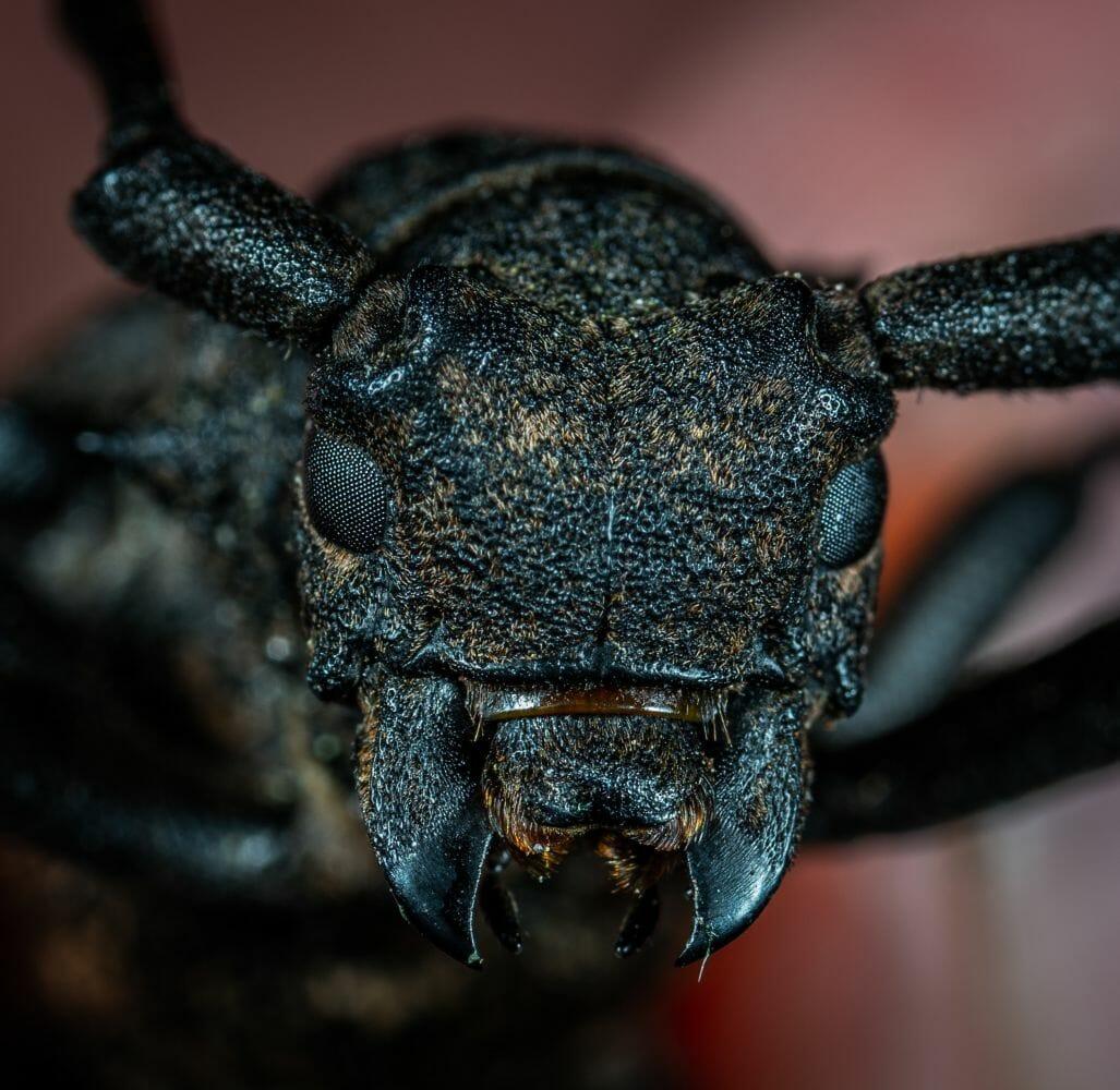 insetos extinção 3