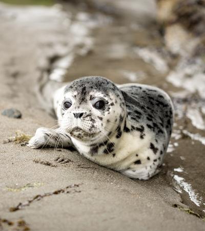 Cientistas encontram pen drive com fotos de leões marinhos em fezes de foca