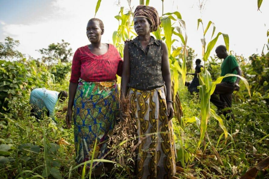 permacultura refugiados uganda 1