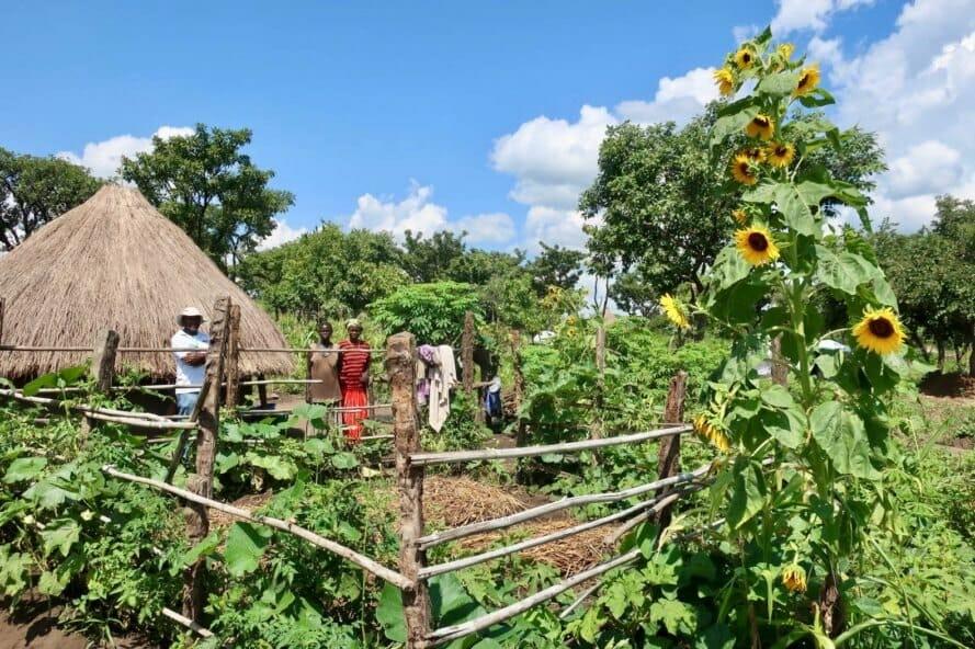 permacultura refugiados uganda 4