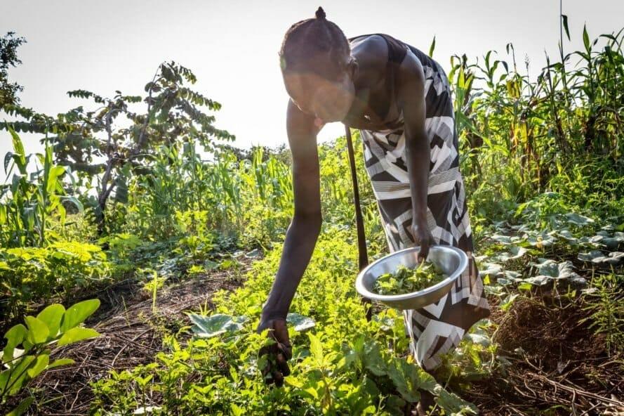 permacultura refugiados uganda 5