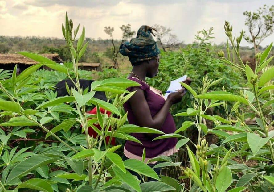 permacultura refugiados uganda 6