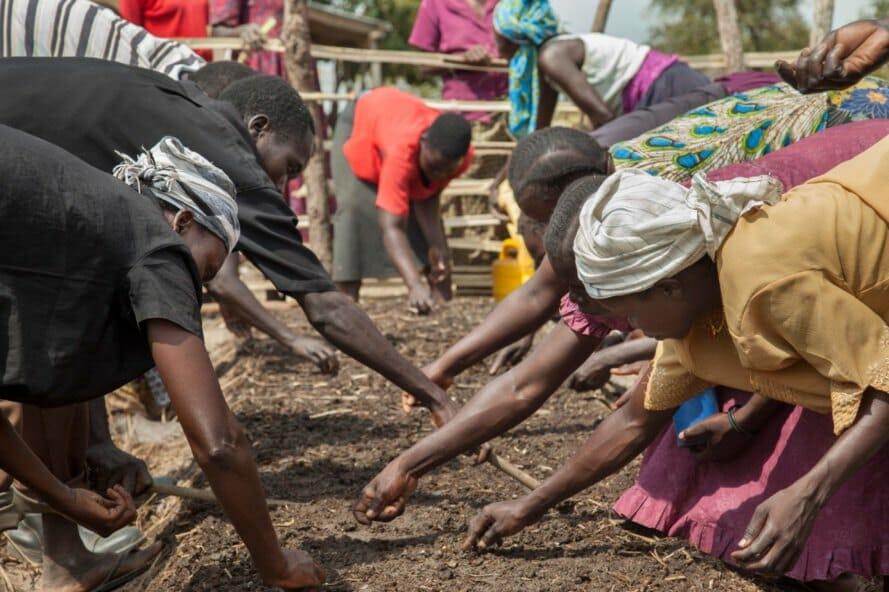 permacultura refugiados uganda 7